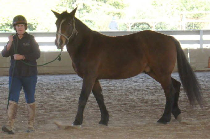 In the young horse group, Marie Fox introduced us to Bentley.